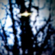 oldviolin Avatar